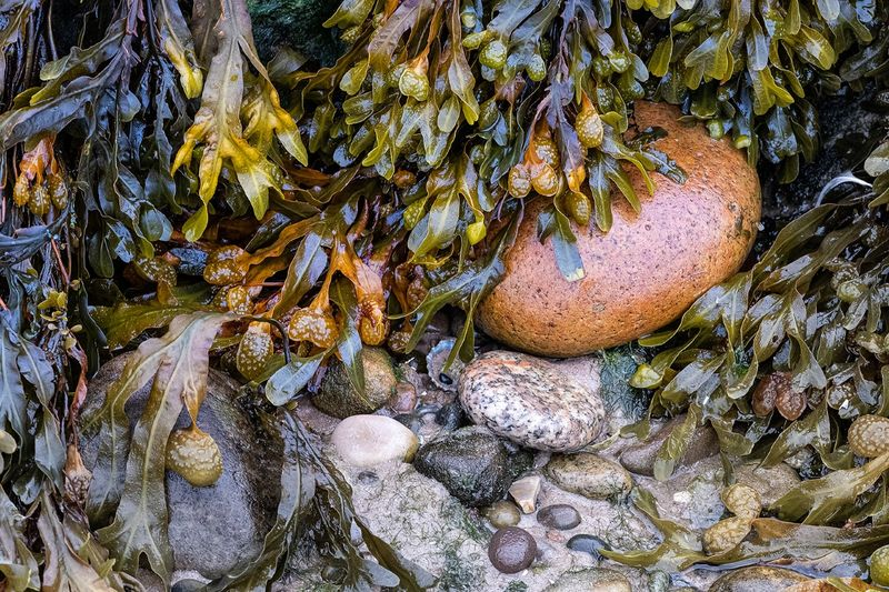 Commended: Seaweed Pebbles and Stone