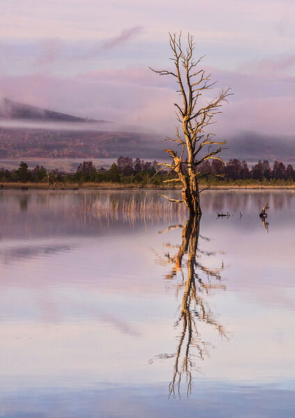 Commended: Early Morning Reflections on Loch Mallachie