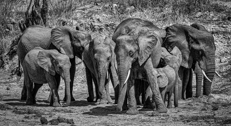 Commended: Elephants Kruger National Park