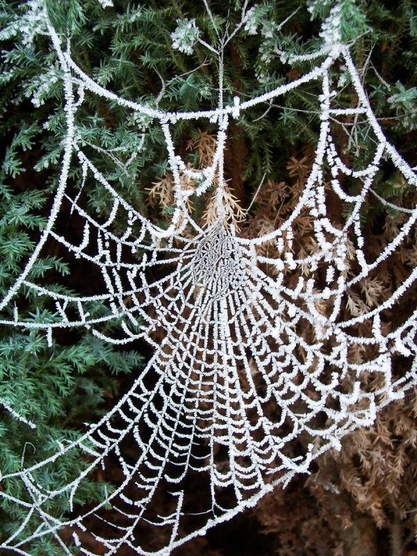 Joint 3rd Place: Spider's Web in Heavy Frost