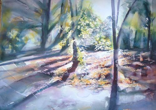 Woodland Sunlight