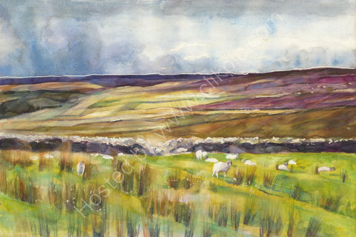 Grimwith Moors