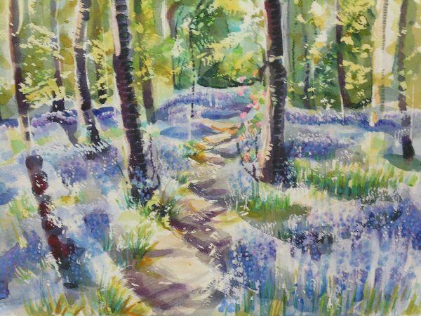 Bluebells 16 Middleton Woods (1)