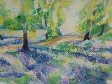 Bluebells 16 Middleton Woods (4)
