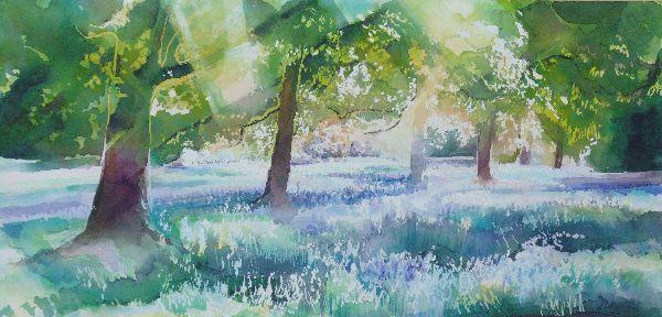 Bluebells 16 Middleton Woods (5)