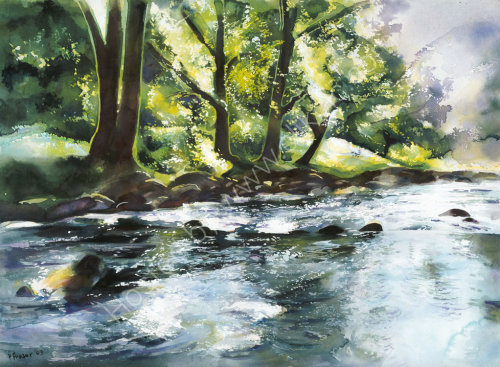 Summer River - River Wharfe