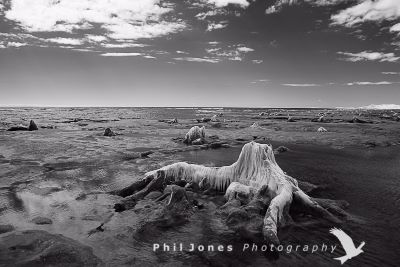 The Submerged Forest, Borth