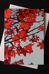 Autumn Leaves - Red