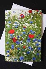 **NEW** Wild Flowers - Cornflowers and Poppies