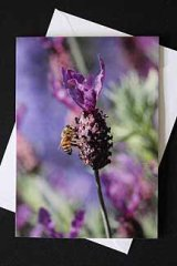 **NEW** Lavender and Bee