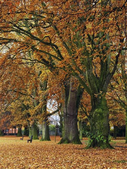 Autumn, Bailey Park Abergavenny.
