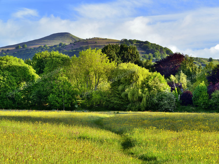Sugar Loaf from Castle Meadows.