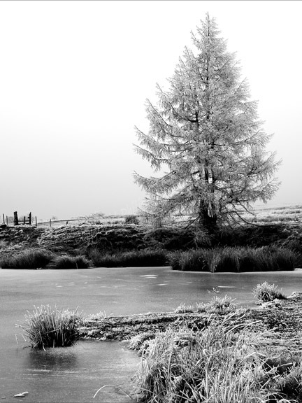 The Dragonfly Pond in winter, Ebbw Vale.