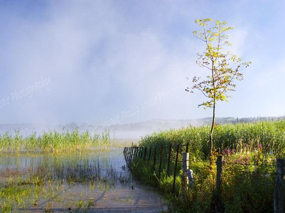 Mist rising,Llangorse Lake.