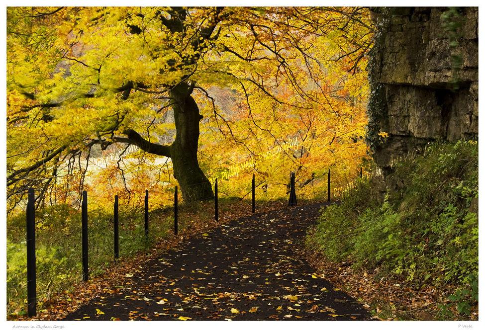Autumn in Clydach Gorge.