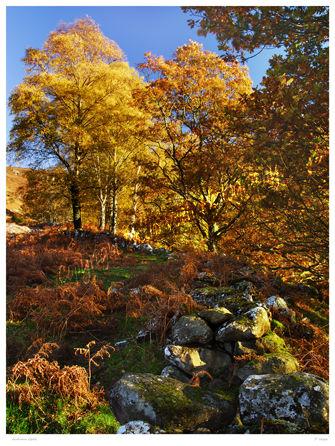 Autumn Gold.
