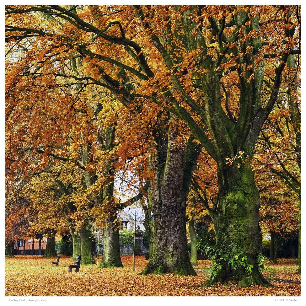 Bailey Park Abergavenny.