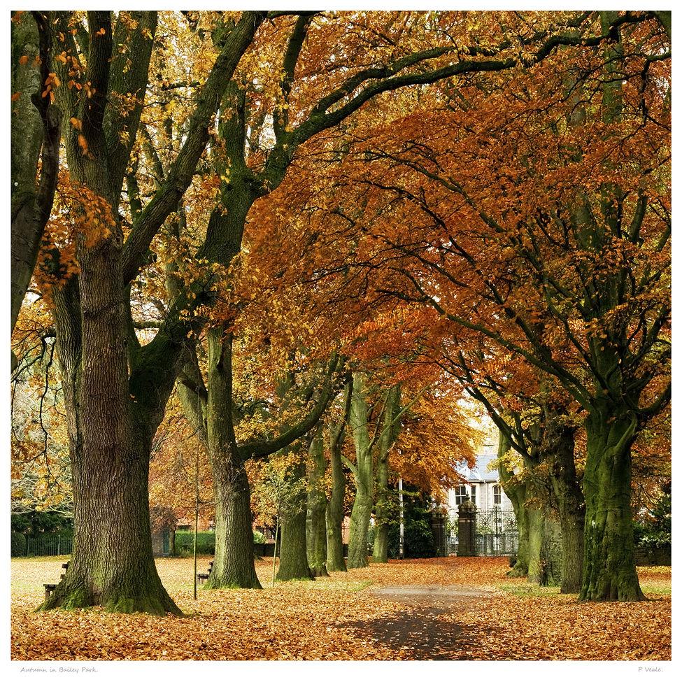 Autumn in Bailey Park.