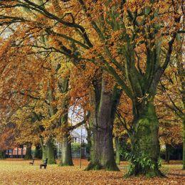 Autumn, Bailey Park Abergavenny. Limited Edition of 100.