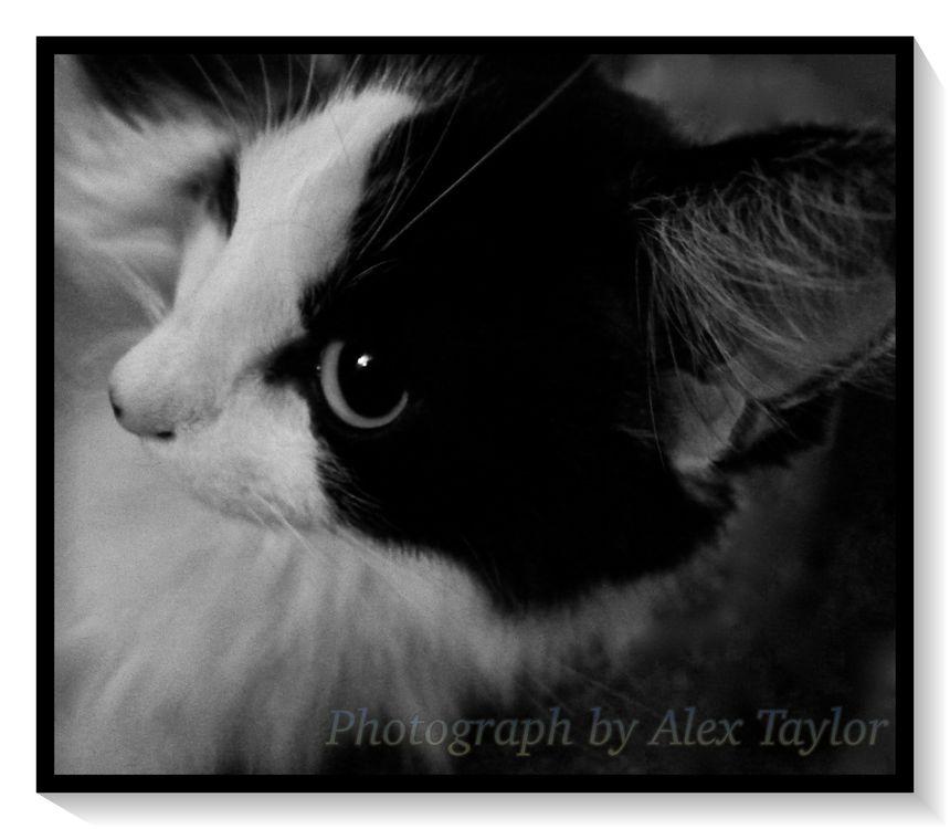 Cat 4D by Alex