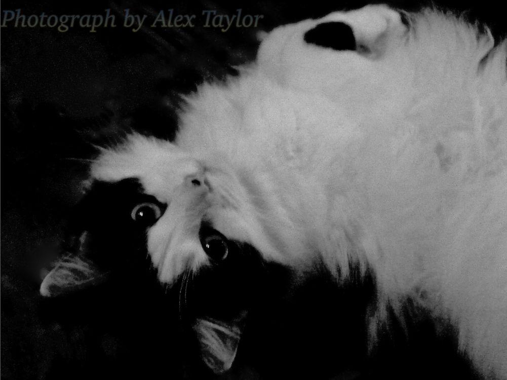 Cat 1A by Alex