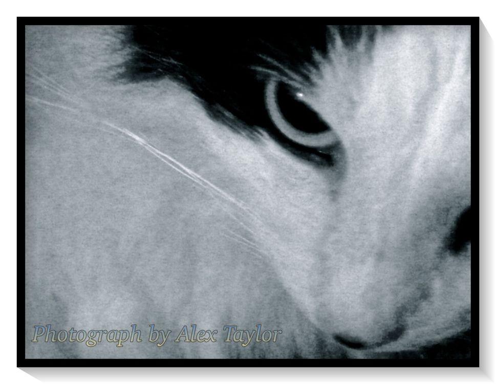 Cat 3C
