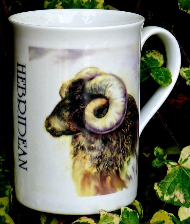 Printed Mug of a Hebridean Ram Mug