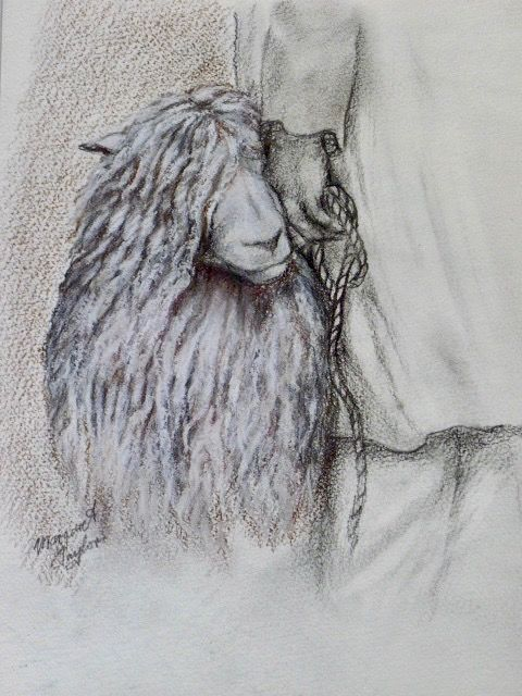 Drawing of Longwool Sheep