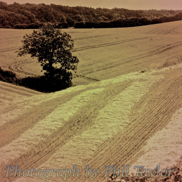 'Harvest' Photographic Print by Phil Taylor