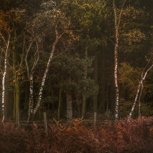 Autumn Woods II
