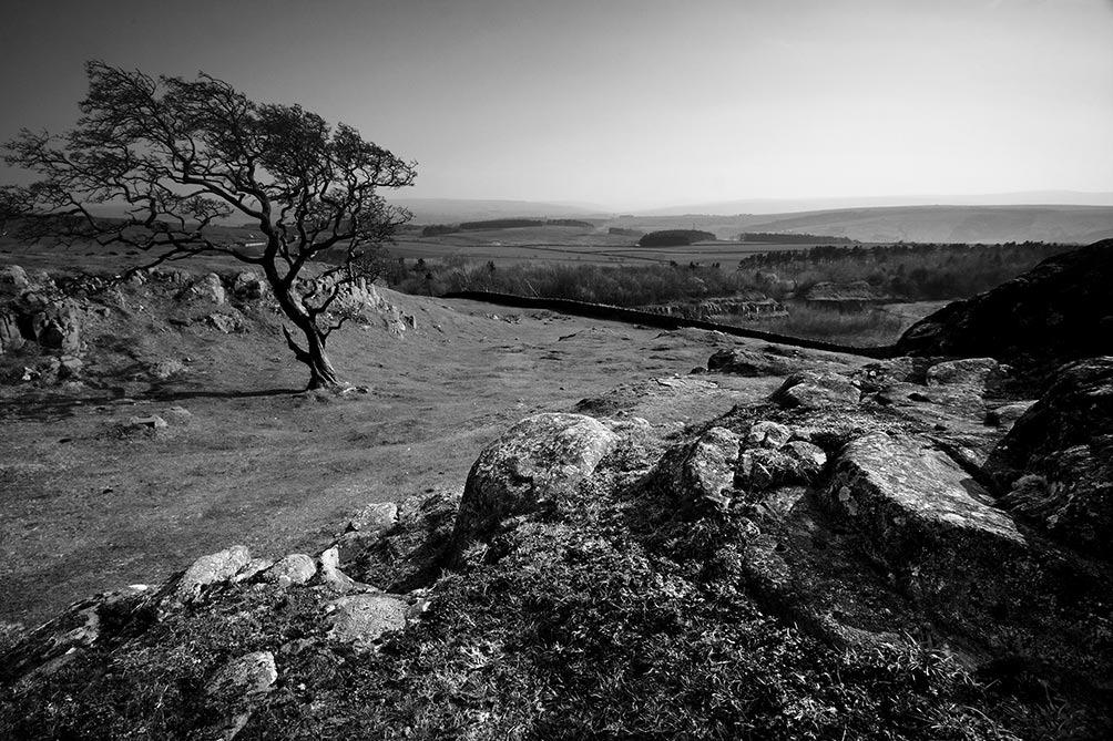 Hadrian's Tree
