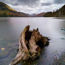 Twisted Tree Trunk-Lake District