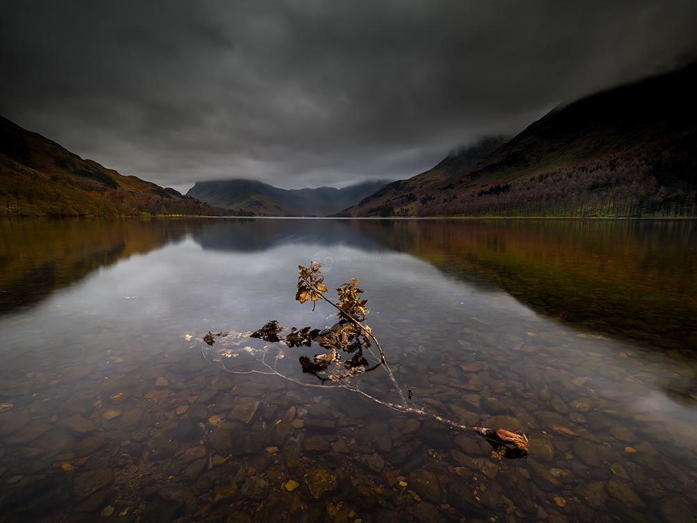 Branch On Buttermere