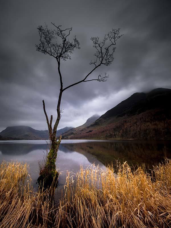 Lone Tree Buttermere II