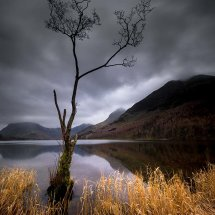 Lone Tree Buttermere II