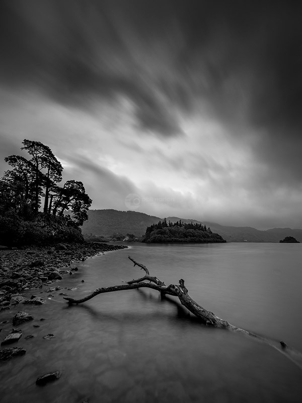 The Branch Mono II