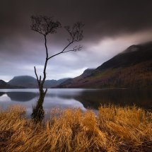Lake District Buttermere Tree