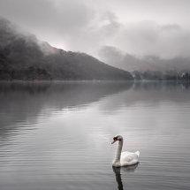 Swan Song II