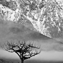 Mountain-Tree-1-Austria