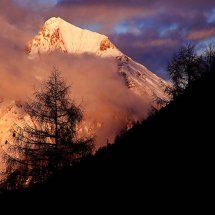 Mountain-Tree-At-Dusk-Austria