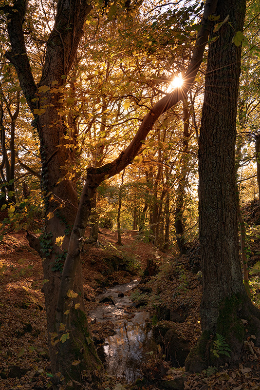 Lumsdale Falls Autumn VI