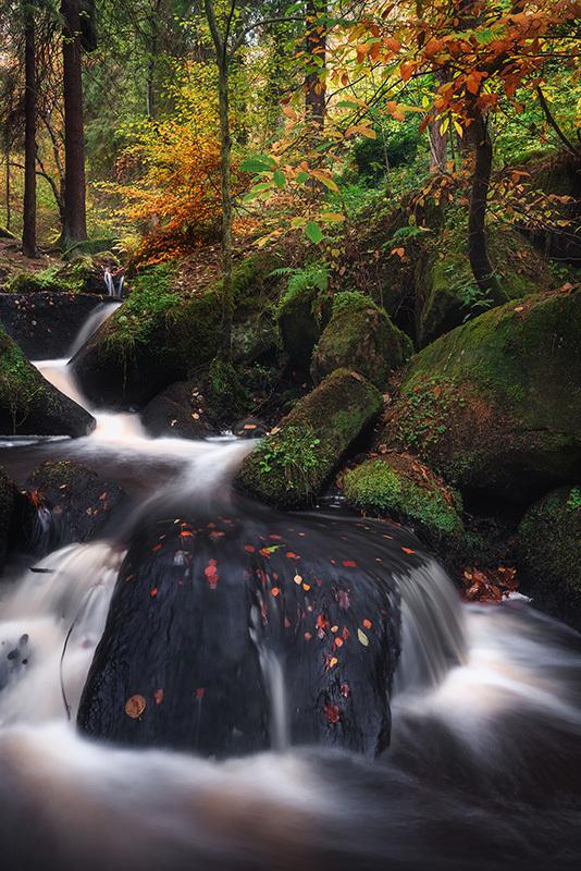 Wyming 'Fairy' Brook