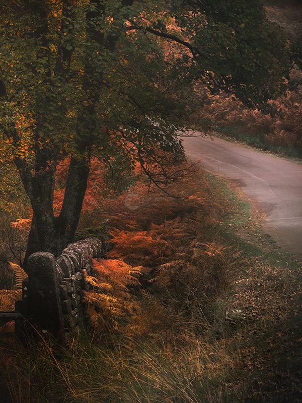 Peaks Autumn Woods I