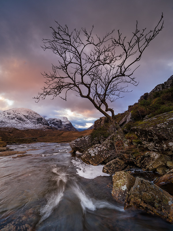 Lone Tree and the Buachaille.