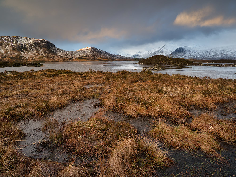 Rannoch Moor Winter Grass I