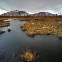 Rannoch Moor Winter Grass II