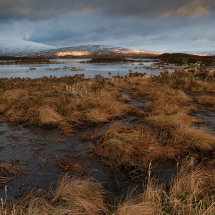 Rannoch Moor Winter Grass III