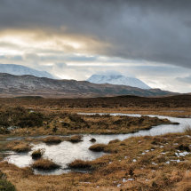 Rannoch Moor Winter Grass V