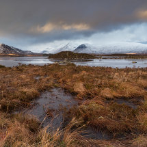 Rannoch Moor Winter Grass VI
