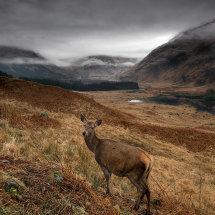 Deer Glen Etiv III